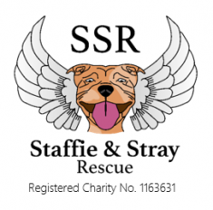 Charity car wash in aid of Staffie & Stray Rescue